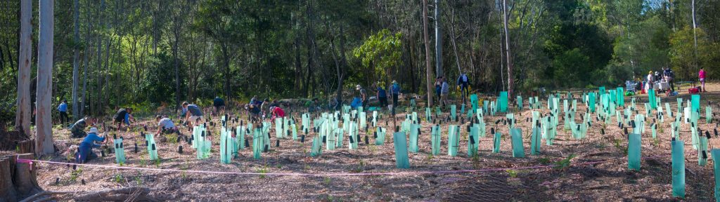 This image has an empty alt attribute; its file name is Panorama-tree-planting-day2r-1024x288.jpg